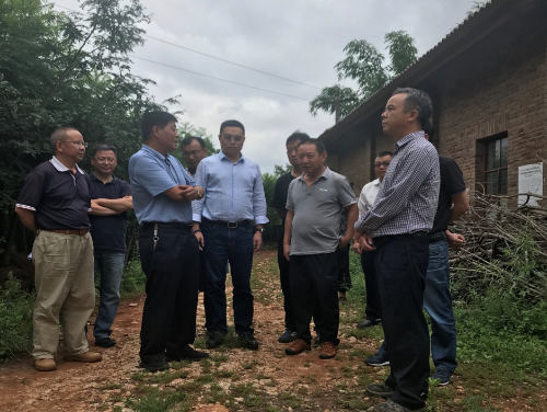 省林草局领导调研宜良县国有林场乡土苗木储备基地建设
