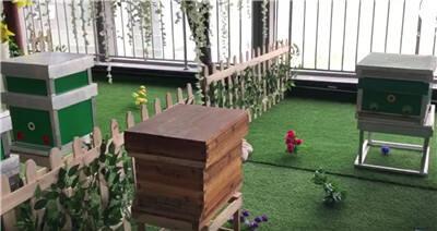 """智慧蜂厂将现身昆明 蜂农用手机就能""""养蜜蜂"""""""