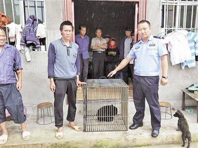 红河州绿春县:一只野生黑熊得到救助