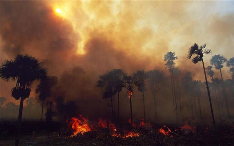 痛心!亚马孙森林大火已持续燃烧16天