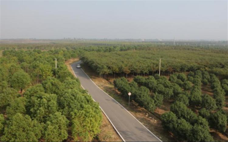 朝阳产业!全国苗木花卉年产值近4500亿元