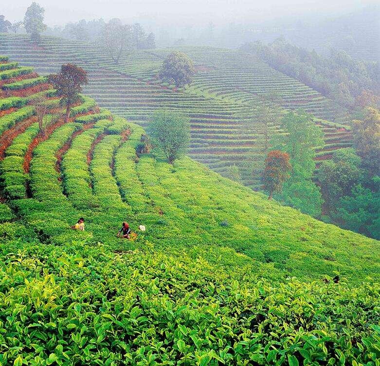 新风向!云南建投云茶山庄打造生态旅游目的地