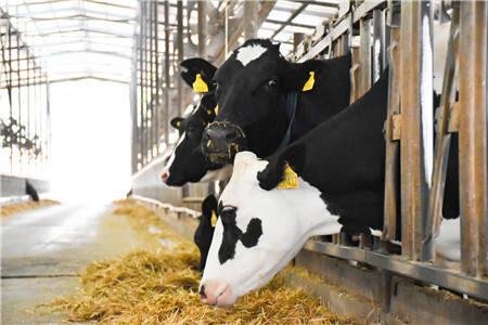 提升乳品质量,企业公开承诺——新乳业在行动