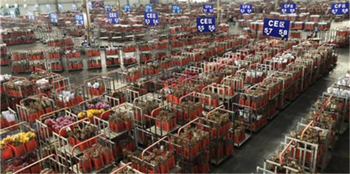 赞!斗南花卉产业园区获中国农产品供应链之星