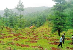 昆明14个国有林场改革3年 林场全面停止砍伐