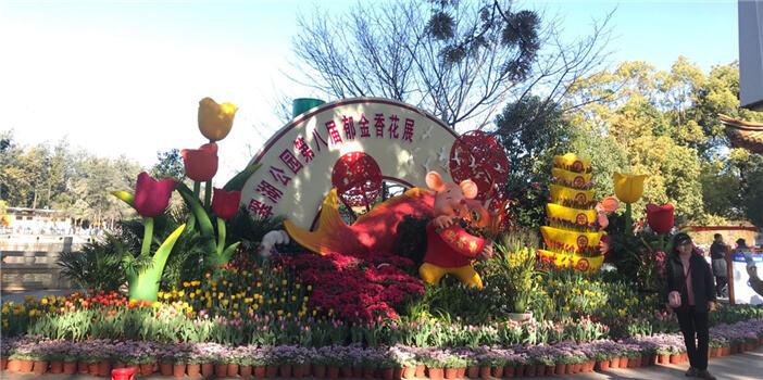 翠湖公园郁金香花展开始了 春节带家人来玩