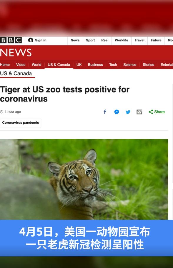 喵视频| 美国动物园一老虎新冠检测呈阳性