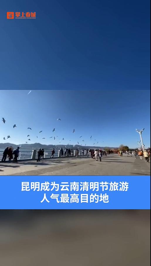 喵视频|清明节出游 昆明成省内最热目的地