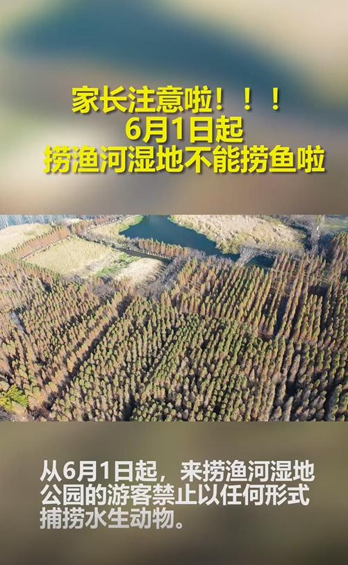 喵视频 | 家长注意!6月1日起捞鱼河湿地不能捞鱼啦